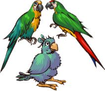 macaw nursery - Google Search