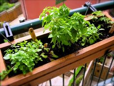 """""""It doesn't get more local than my balcony, which I've just adorned with a cute little herb box full of mint (as I'm not chewing gum anymore), lemon balm (because I miss not having lemons), basil (risky, I know), swiss chard (even riskier) & an organic cherry tomato plant[…]"""""""