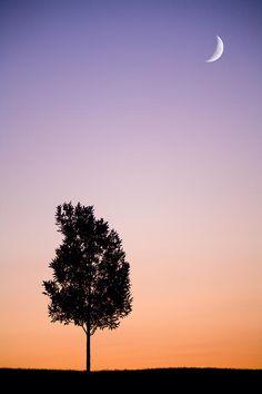 ✯ Sunset Moon