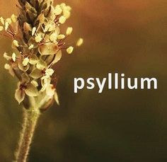 #Psyllium has been clinically proven to help with #ibsproblems #diabetes #hearthealth #cholesterol #stroke #crohns