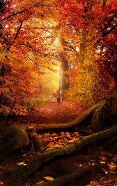 Lost in autumn outdoors nature trees autumn