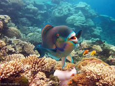 Best Coral Reef Locations: the Maldives or the Great Barrier Reef? Great Barrier Reef, Maldives, The Coral Island, Big Island, Under The Ocean, Ocean Creatures, Underwater World, Sea World, Deep Sea
