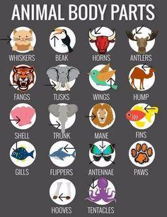 English Vocabulary: Animal Body Parts English Vocabulary Words, Learn English Words, Grammar And Vocabulary, English Phrases, English Study, English Grammar, Vocabulary Games, Vocabulary Parade, English Writing Skills