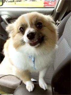 Our dog Yogi. Fultz Family, Sidney, OH - 7/29/2015