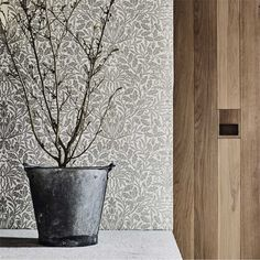 Shop for Wallpaper at Style Library: Pure Acorn by Morris & Co. A beautiful, monotone wallpaper featuring a pared back representation of acorn bra. William Morris Wallpaper, Morris Wallpapers, Fabric Wallpaper, Pattern Wallpaper, Wallpaper Murals, Craftsman Wallpaper, Painted Rug, Wallpaper Online