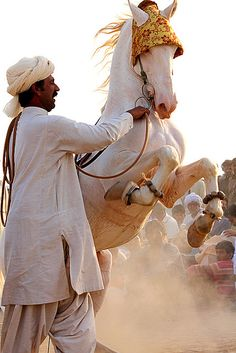 Dancing Horse by S M JOYIA, via Flickr