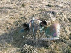 Click this image to show the full-size version. Abandoned Cars, Abandoned Buildings, Abandoned Places, Abandoned Vehicles, Rust Never Sleeps, Rust In Peace, Rusty Cars, Old Trucks, Lifted Trucks