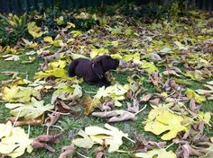 Playing in the leaves........