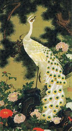"""動植綵絵 第一期(1757-1760), 09. 老松孔雀図[ろうしょう くじゃく ず], """"Pictures of the Colorful Realm of Living Beings"""", Jakuchu Ito"""