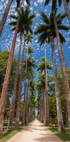 A TROPICAL HONEYMOON SPOT FOR COUPLES AROUND THE WORLD (In honor of the 2016 Summer Olympics in RIO)  Botanic Garden, Rio de Janeiro -Jardim Botânico