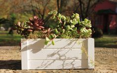 SMALL Succulent centerpieces // Wedding centerpieces by GreenPick on Etsy