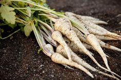 See how to choose and store the best parsnips, and then get tasty ideas for using them with simple recipes.
