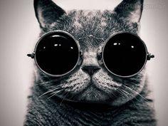 É tendência: óculos de gatinho! | Rock & Beauty