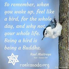 So remember, when you wake up up, feel like a bird, for the whole day, and why not, your life. Being a bird is being a Buddha. Rael Maitreya - Contact 388  #peace  #nuclearban #lovehumanity #RaelMaitreya #rael #raelian #raelians #raiseconsciousness #love #meditate4peace #compassion #godless #atheism #1min4peace