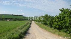 Paisajes veraniegos.   #fotolia #sold #photo #Photo #photography #design #photographer #Landscapes #summer #green #fields #roads #colorful