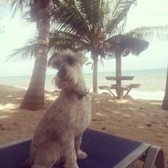 Camp Bay, Roatan, Honduras (Nov 2016) Nov 2016, Roatan, Honduras, Camping, Instagram Posts, Dogs, Animals, Campsite, Animales