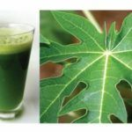 Papaya Leaves Balance Blood Sugar and Boost Immunity