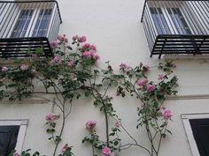 #l4l #makeup #model #night #sundown #morning #panorama #landscape #fashion #tumblr #nature #flowers #travel #world #art #sky #style #skinny #photoshoot #Instagram #swag #photography #colorful #vsco #vintage #like4like #flowers #likeforlike #spring #architecture http://tipsrazzi.com/ipost/1517048300040509383/?code=BUNo2QnBlfH