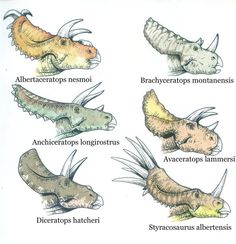 Ceratopsids part 1 by ~T-PEKC on deviantART