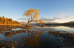 Golden Dawn - On the edge of Lake Wanaka, there stands a lone tree that grows just off the rocky shore. Elia Locardi Photography