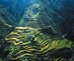 Rice terraces_dubbed as one of the eight  wonders of the world in 1995 by UNESCO.