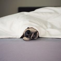 This is what I see every morning when I go to get Morty out of Melinda's bed! So funny!