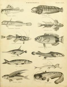 "James Wilson | An introduction to the natural history of fishes: being the article ""Ichthyology"" 