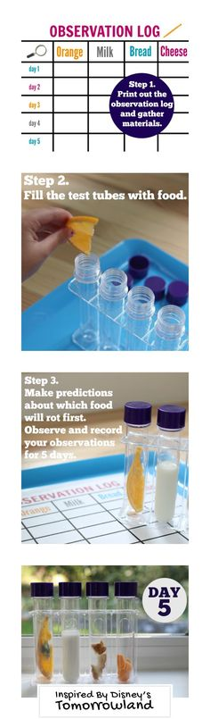Gather your materials and print the observation log. Then fill the tubes with food and make predictions which food will rot first.