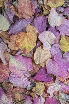 Autumn leaves with soft lavender, gold, and and brown.