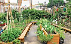 The London school taking veg from playground to plate - Telegraph
