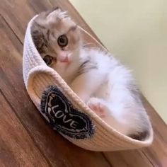 So cute 😻 #cats #dogs #kittens #puppies #kitty #animals #cat #kitten #catsupply #cattoys #animalsandpetsupplies #animalscute #funnyanimals #cutebabyanimals #cuteanimals #funnybabyanimals #cute_animals, Cute Baby Cats, Cute Little Animals, Cute Cats And Kittens, Cute Funny Animals, Funny Cats, Diy Funny, Kitty Cats, Cats In Hats, Ugly Animals
