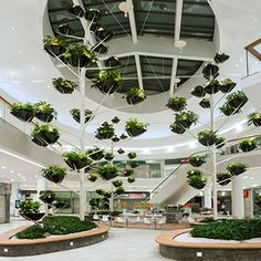 For this plaza garden in Vienna, Designers at Alexis Tricoire, created an Agave…