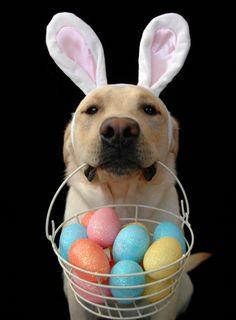 Happy Easter, Happy Passover, Happy Sunday.