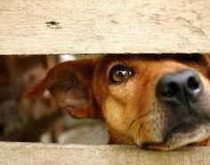 Resultado de imagen para perros abandonados imagenes  AMIGOS