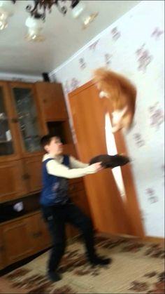 Летающий кот каскадер. (+плейлист)