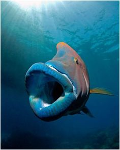 Give us a kiss and tell us what type of fish this is :)