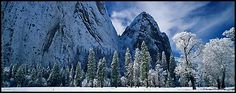 Winter scene with snow-covered trees and Cathdral Rocks. Yosemite National Park (Panoramic color)