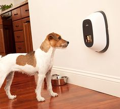 A pet-cam that lets you video chat with your pet when you're at work. You can also set it up to give your dog a treat! Gizmo might ignore my video chat; Mitzy would be confused and penny might be too scared of it. Green Label, Just In Case, Just For You, Cool Gadgets, Tech Gadgets, Pet Shop, Mans Best Friend, Doge, Pitbull