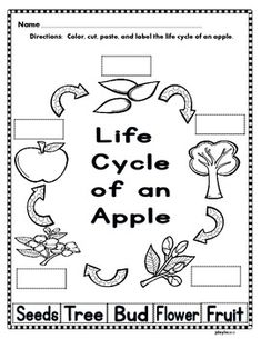 Apple Life Cycle Mobile | Preschool science, Activities and Worksheets