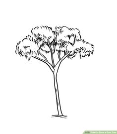 How to draw a gum tree