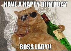 Funny happy birthday pictures, images, and pics. Have some fun with your friends on their birthday by giving them funny birthday pictures, wishes, and quotes Happy Birthday Boss Lady, Cat Birthday, Birthday Memes, Funny Cats, Funny Animals, Cute Animals, Funniest Animals, Crazy Cat Lady, Crazy Cats