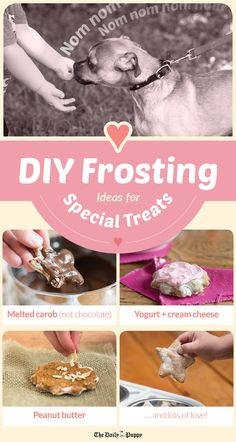 Dogs have birthdays and holidays to celebrate just like people do, and baking a few cakes and cookies to decorate with dog-friendly icing is a creative way to bring your dog in on celebrations. Puppy Treats, Diy Dog Treats, Homemade Dog Treats, Dog Cake Recipes, Dog Food Recipes, Dog Cake Frosting Recipe, Dog Treat Icing Recipe, Butter Frosting, Frosting Recipes