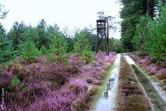 JEP 2014 à Souesmes - 20 et 21 septembre sur le thème de la chasse - Programme ici : http://www.tourisme-solognedesrivieres.fr/actu.php#453