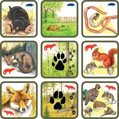 Pexetrio Plus: Savci Forest Animals, Woodland Animals, Animal Coverings, Animal Tracks, Forest Theme, Animal Habitats, Montessori Materials, Science Experiments Kids, Fauna