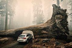 Sequoia Tunnel, Yosemite, California