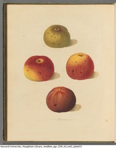 Brookshaw, George, 1751-1823. Pomona britannica; or, A collection of the most esteemed fruits at present cultivated in Great Britain; selected principally from the royal gardens at Hampton court …...