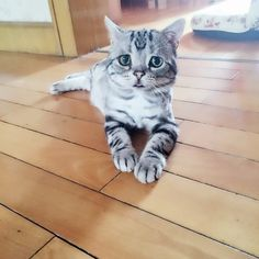 This Adorably Sad Cat Will Warm Your Cold, Cold Heart