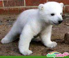 """Cute lil polar bear!  This little guy likes to hang out in the """"winter"""" forest...the snow fairy...and other """"chilly weather"""" creatures keep him company."""