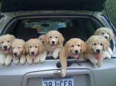 truck full of pups!!
