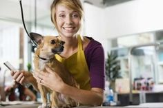 How to Open Your Own Doggy Daycare Center | eHow